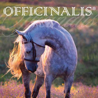 Integratori naturali per cavalli